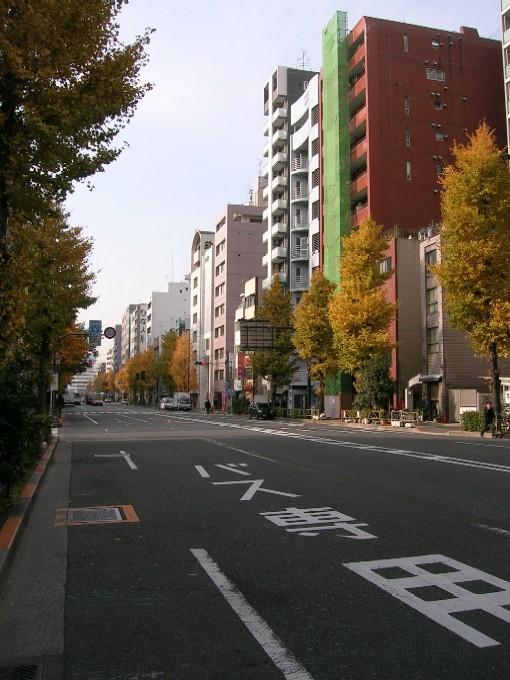 20071214-銀杏並木.jpg