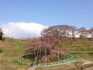 20160407-滝桜.jpeg