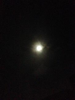 20170310-おぼろ月夜.JPG