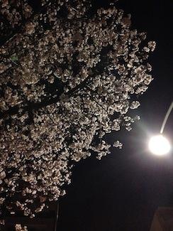 20170331-東京夜桜.JPG
