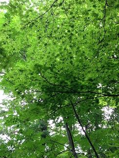 20170803-裏山の緑.jpg