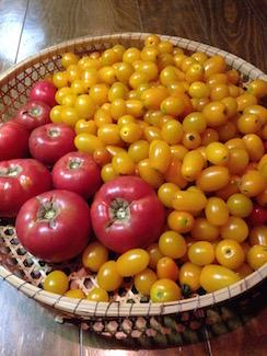 20170905-トマトたくさん.jpg